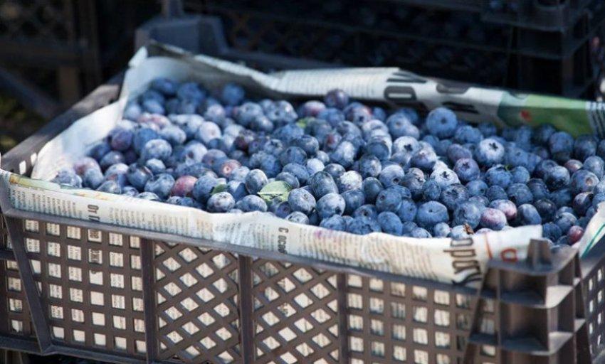 В Україні закінчується сезон ягід: скільки коштують на базарах залишки лохини, малини і полуниці