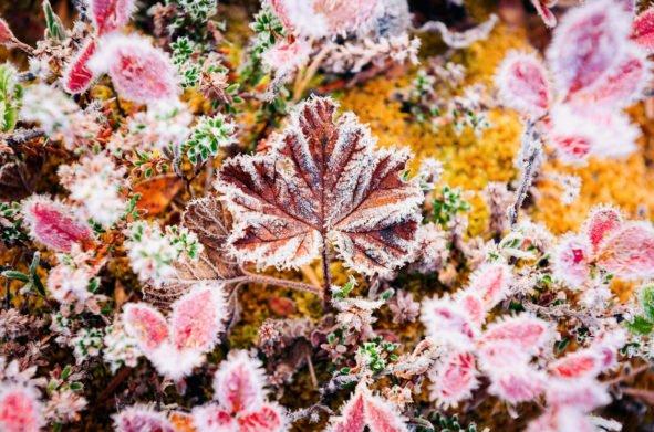Украину накроют заморозки до -3 градусов: синоптики назвали области, где резко похолодает в середине недели - today.ua