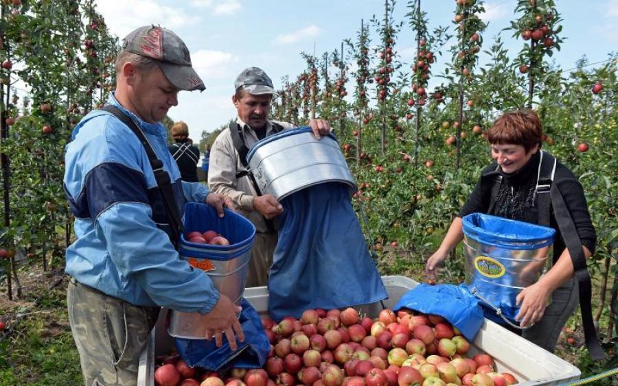 Украинские заробитчане отказываются от работы в Польше: в чем причина, и что будет дальше