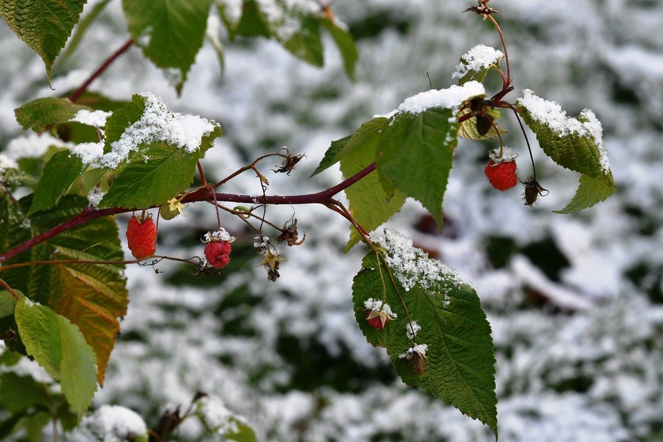 Останній прогноз синоптика Леоніда Горбаня: в Україну зима прийде вже в листопаді