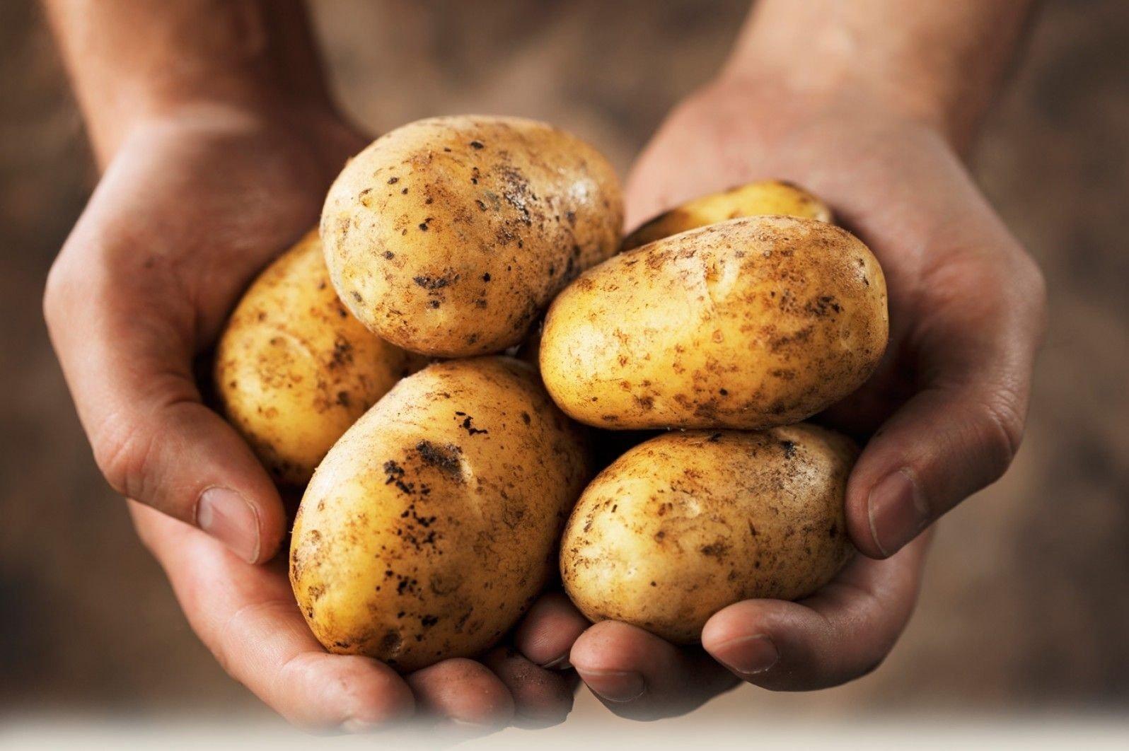 Як зберегти картоплю в квартирі до весни: секрети господинь