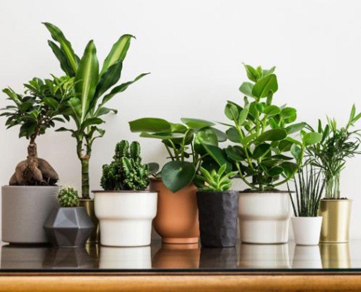 П'ять кімнатних рослин, які на 85% очищають повітря в кімнаті від шкідливих домішок