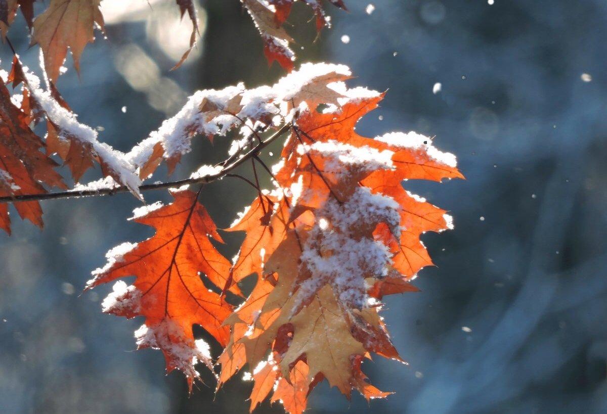 Стало відомо, коли в Україні піде сніг і вдарять морози: прогноз погоди від Леоніда Горбаня